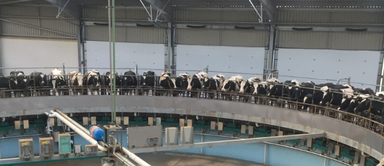 Agricultural Doors for Cow Milking Units